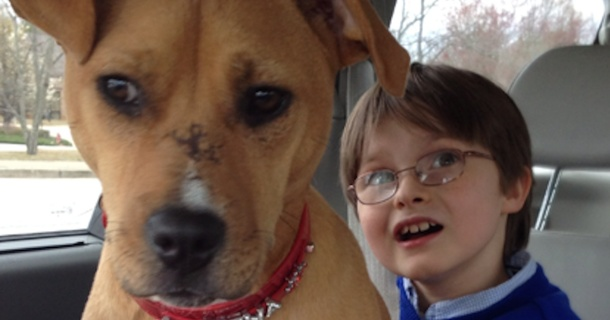 A Family Adopted An Abused Dog For Their Son With Autism, They Had No Idea Their Lives Would Be Changed
